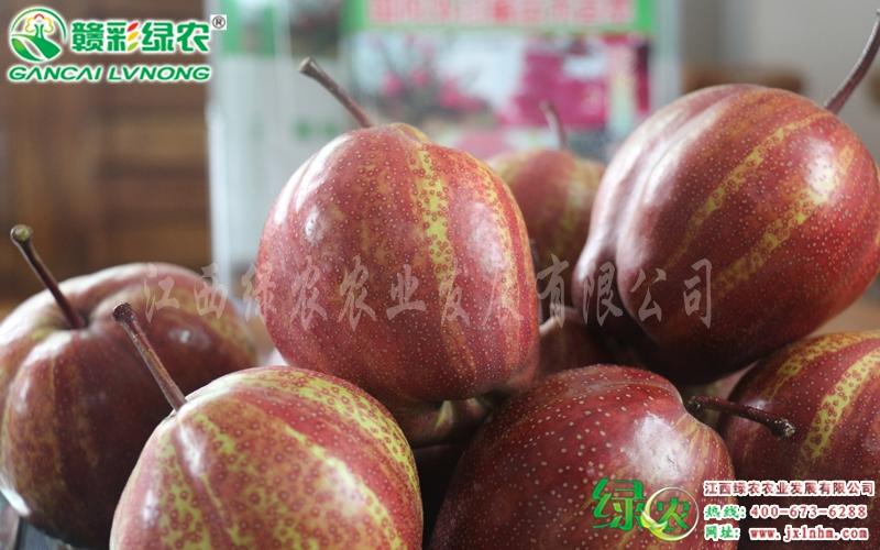 奇红早酥梨常年水肥疏花疏果及套袋管理