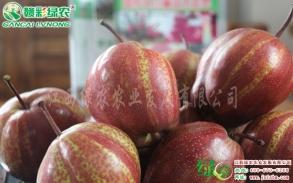 红梨新品种-奇红早酥梨锈病的防治方法